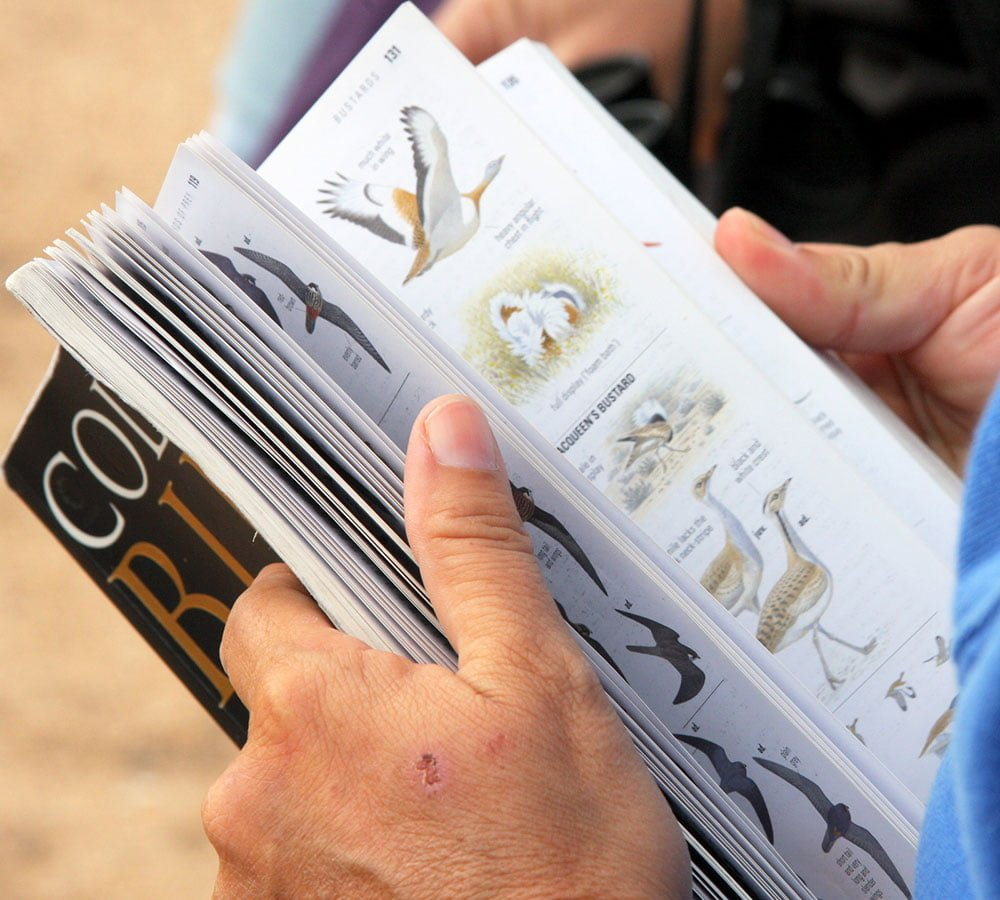 learn about birdwatching lanzarote