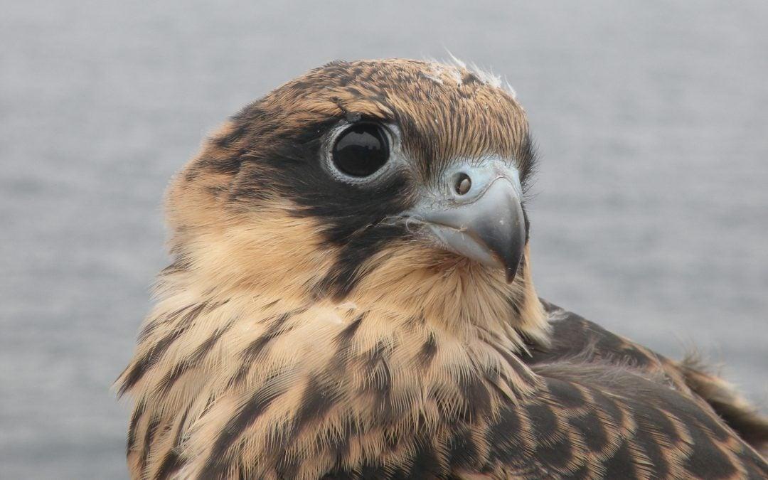 Birdwatching Lanzarote & The Marine Reserve