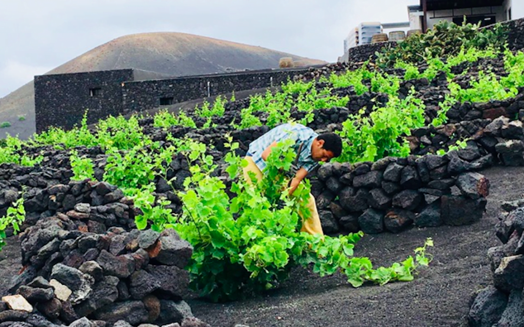 Lanzarote Wine - Guided Tasting Tours